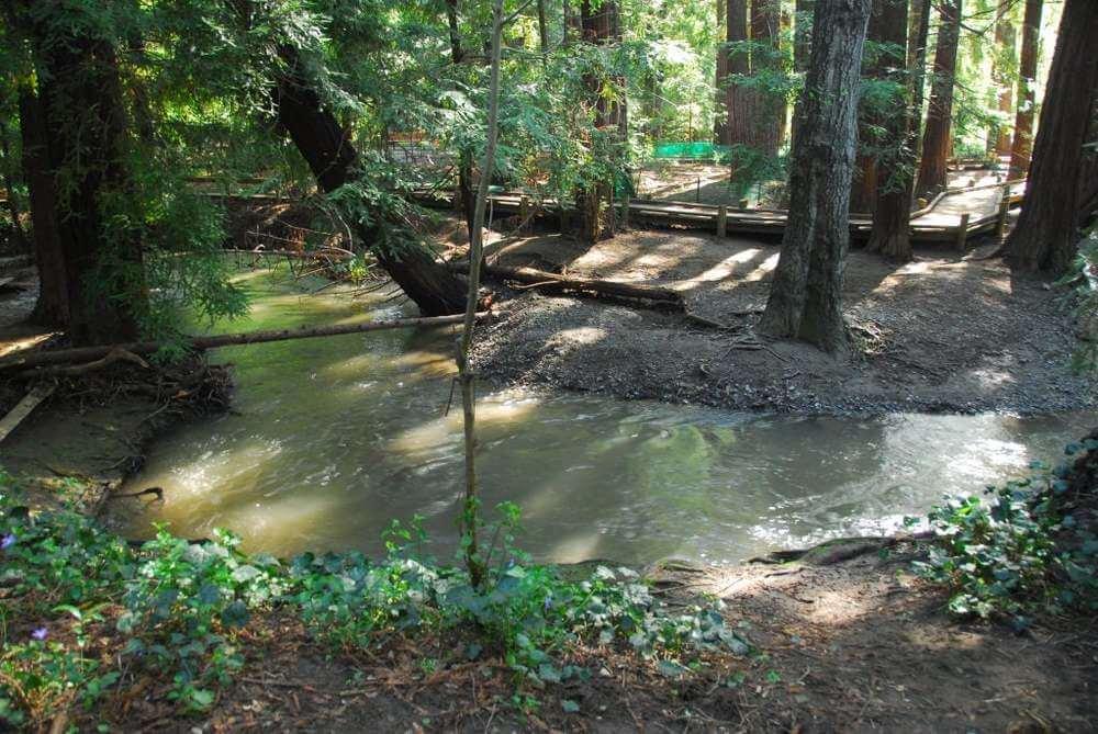 Тот самый ручей Adobe Creek в Калифорнии, в честь которого назвали будущую компанию.